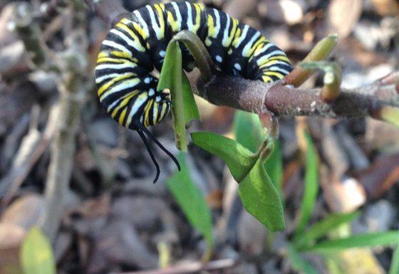 17 DGNP Caterpillar IMG_6115